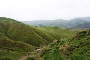 Aranui Fallow Meat Hunt Trip Report By Brenton Hodgson